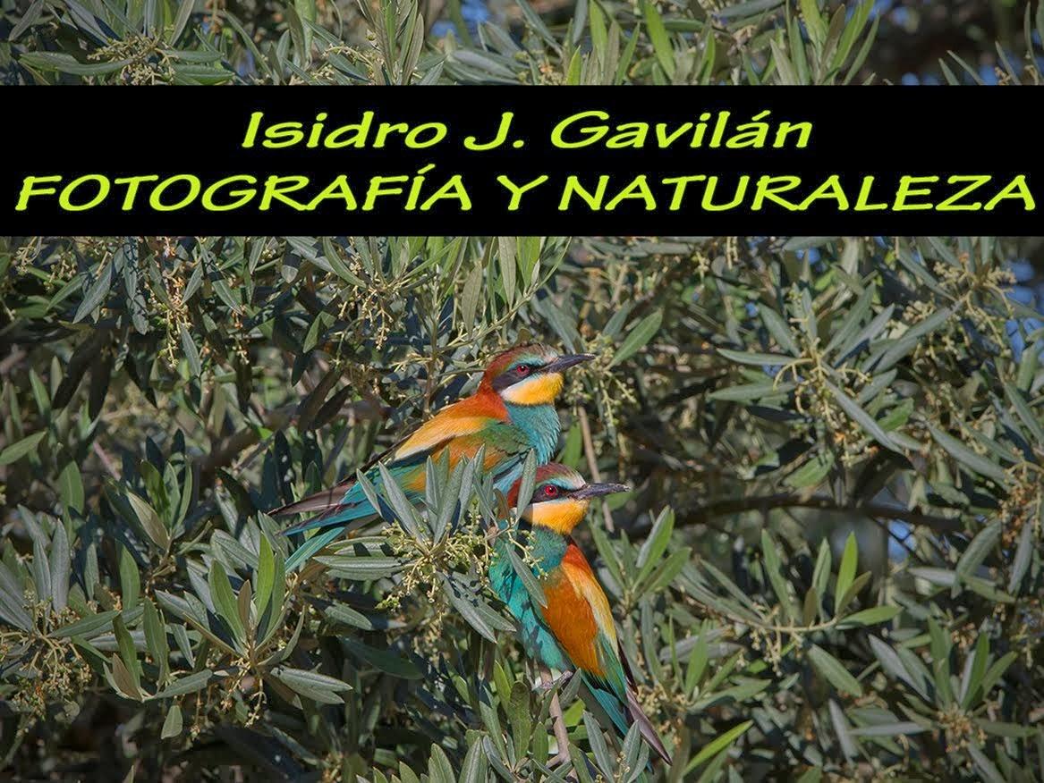 Isidro J. Gavilán - Fotografía y naturaleza