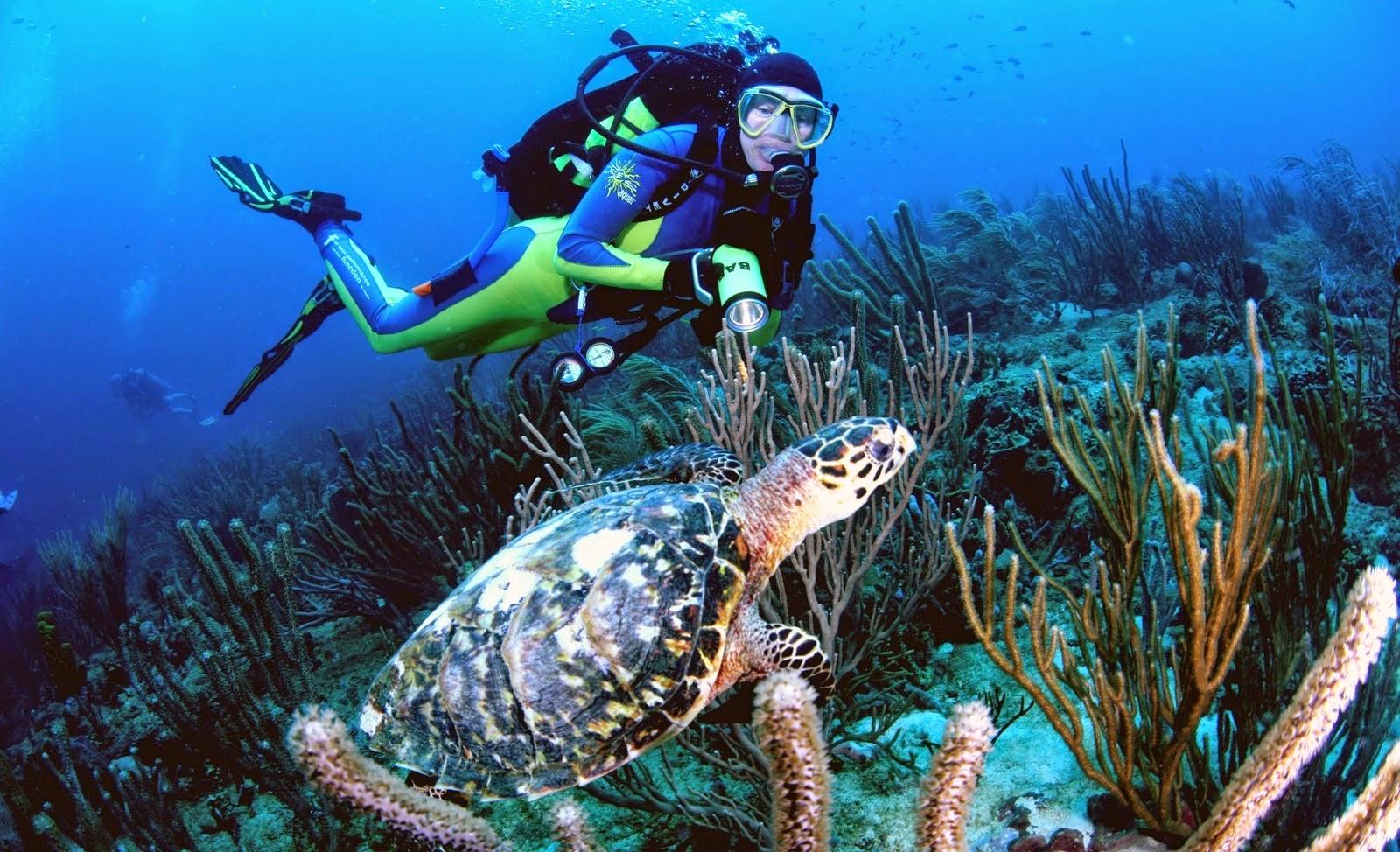 Enjoy the 10 Best Beach Activities near The Ocean View Resort - photo#13