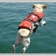 Life-jackets for dogs