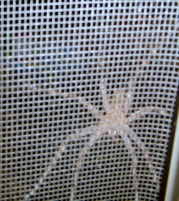 spider while workamping by Dear Miss Mermaid copyright by http://DearMissMermaid.com