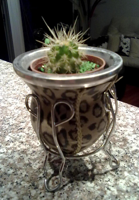 Decoracion y dise o cactus decoraci n para tu casa o for Cactus decoracion