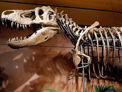 Dinosaurus Punah Karena Asteroid dan Super Volcano