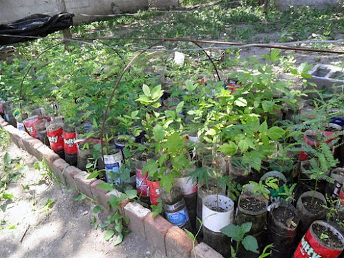 cuidar la naturaleza es nuestro hobbie viveros escolares