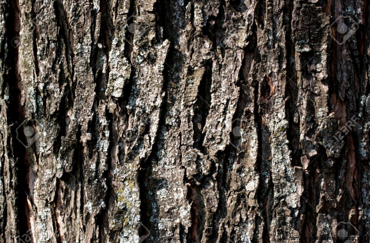 Tree Trunk Texture Stock Photos Pictures Royalty Free Tree Trunk