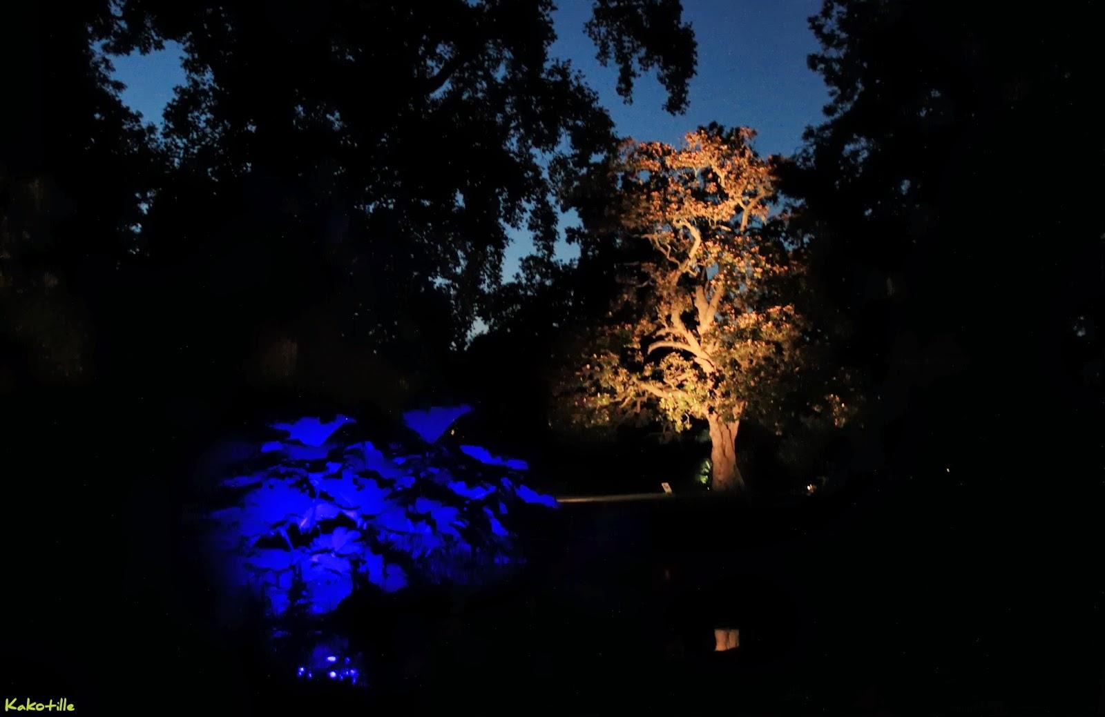 Maillalenvers le voyage nantes 2013 la nuit f rique de ponti for Jardin des plantes nantes de nuit