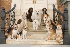 Vigocanes educadores caninos y expertos en modificación de conducta. Desde 1998.