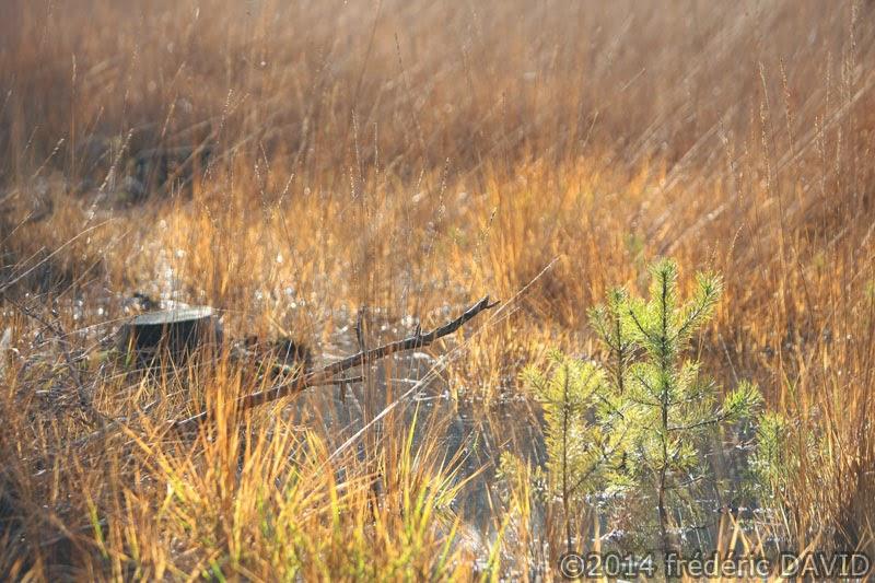 marais forêt brume Fontainebleau