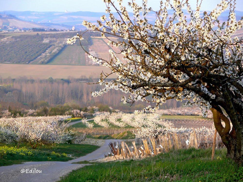 la Montagne en fleurs, the valley of happiness in Spring, СЧАСТЛИВАЯ ДОЛИНА ВЕСНОЙ.