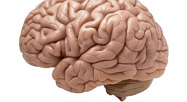 Teori: Kerja Otak Kanan dan Kiri Sama