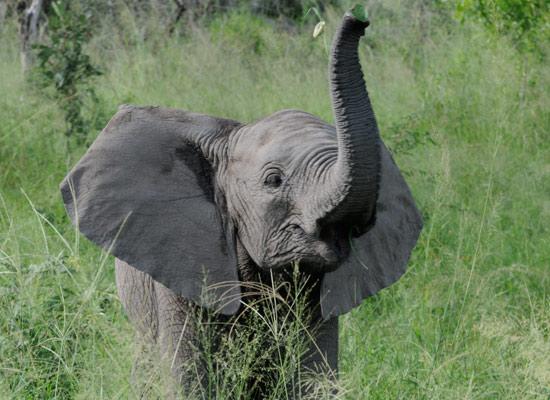 baby elephant tyler