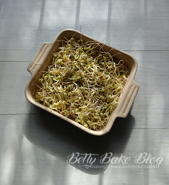 sprouts, sprouting, tutorial, recipe, betty bake, raw, superfood, vegan, vegetarian, health, green, salad, easy, grow your own food, jerf,
