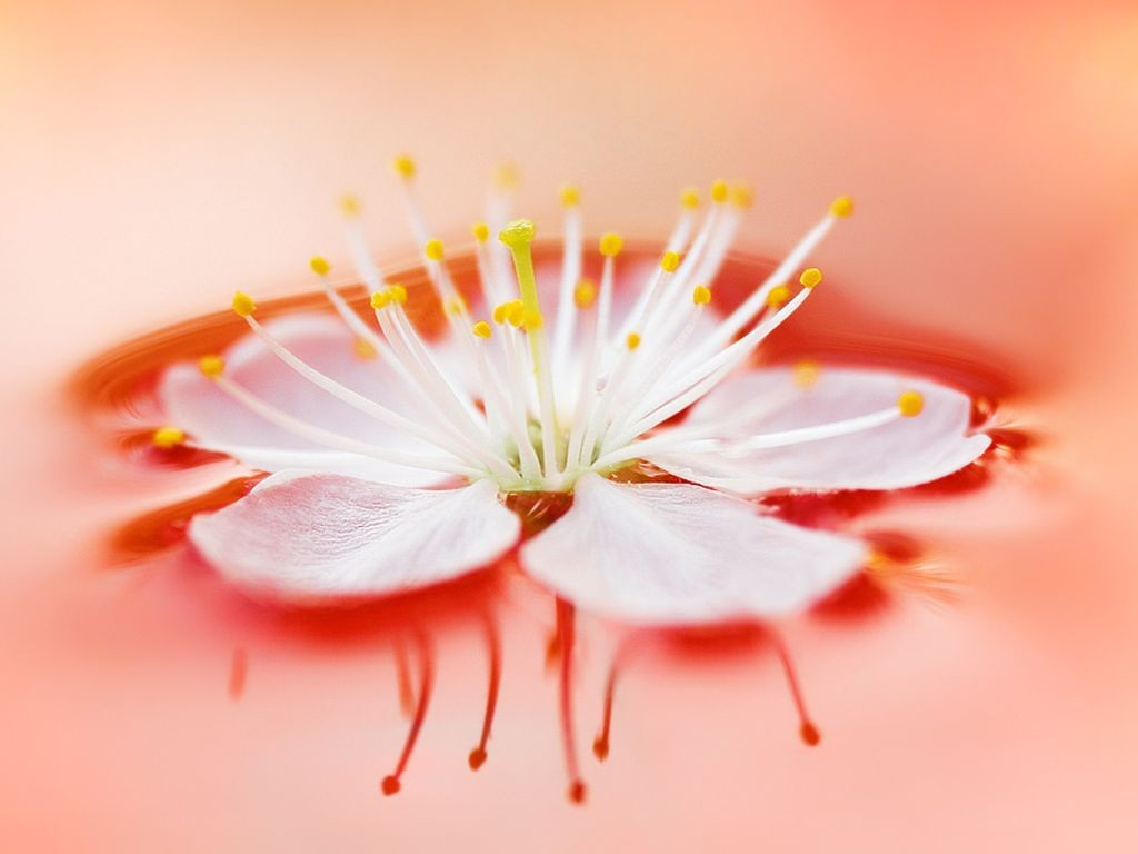 wallpapers hd desktop wallpapers free online flower