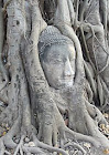 Buddha in the tree at Ayutthya