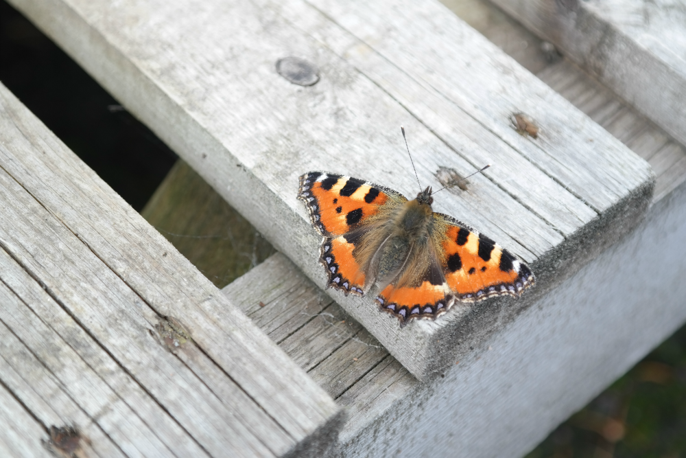 Butterfly on wooden pallet