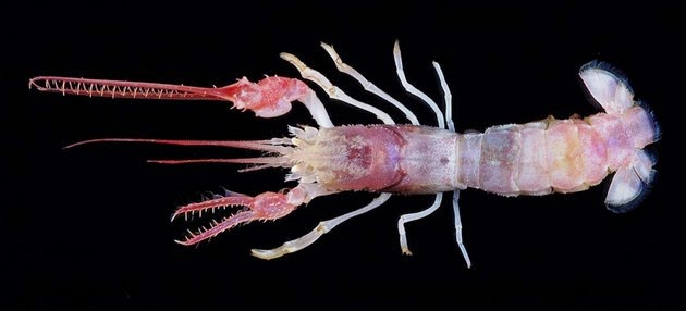 bizarre-sea-creatures-4