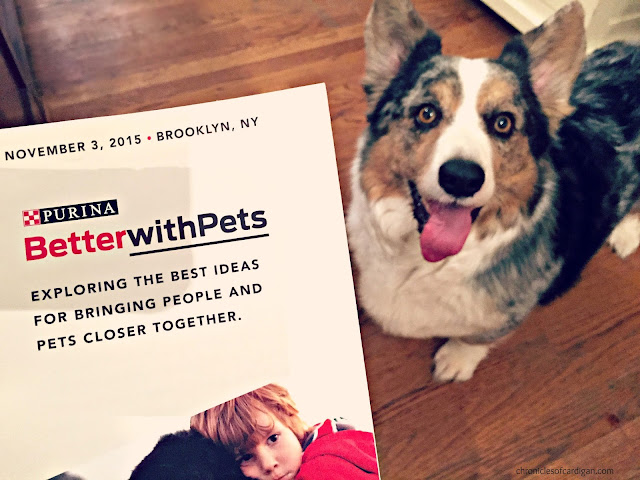 program for 2015 Purina Better With Pets next to blue merle corgi looking up