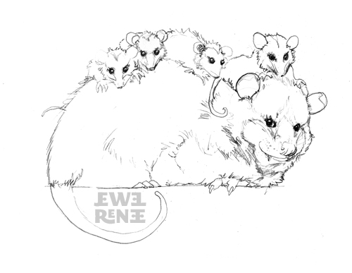 Opossum Coloring Pages Opossum Coloring Page