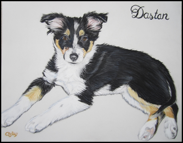 Portraits animaliers - Page 4 Border+collie+pastels