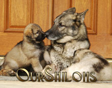 2013 OurShilohs Calendar