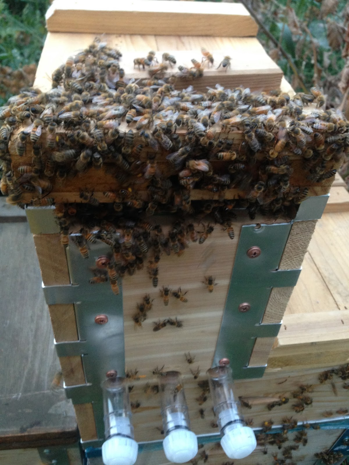 Flow Hive Review And Testing By Albert Chubak Eco Bee Box Modern Wiring Board Frames Beekeeping Honey Beehive