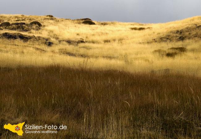 Leuchtendes Gras auf dem Vulkan Ätna