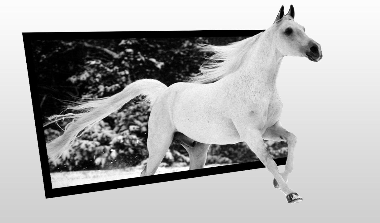 Cara Membuat Gambar Keluar dari Frame (Bingkai Foto) Photoshop