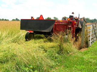 mowing hayfield 3