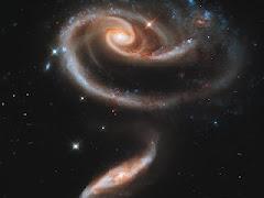La Rosa del Espacio