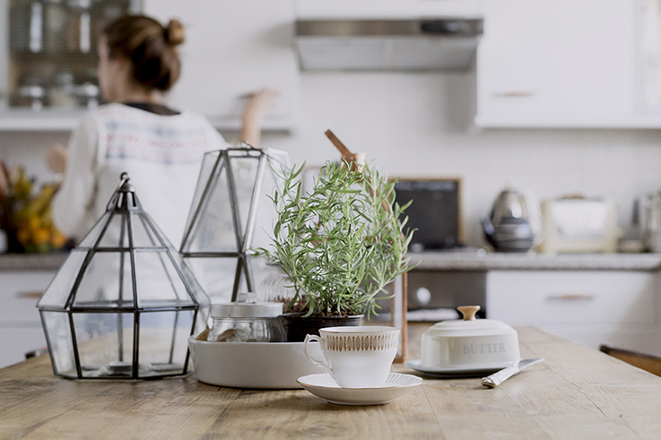 Five Indoor plants to clean help clean pollution from your home and office