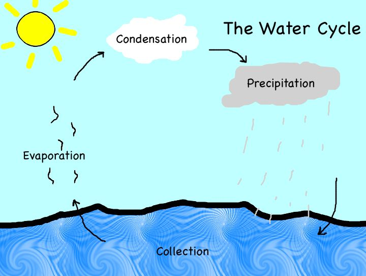 Worksheet #616869: free printable water cycle worksheet