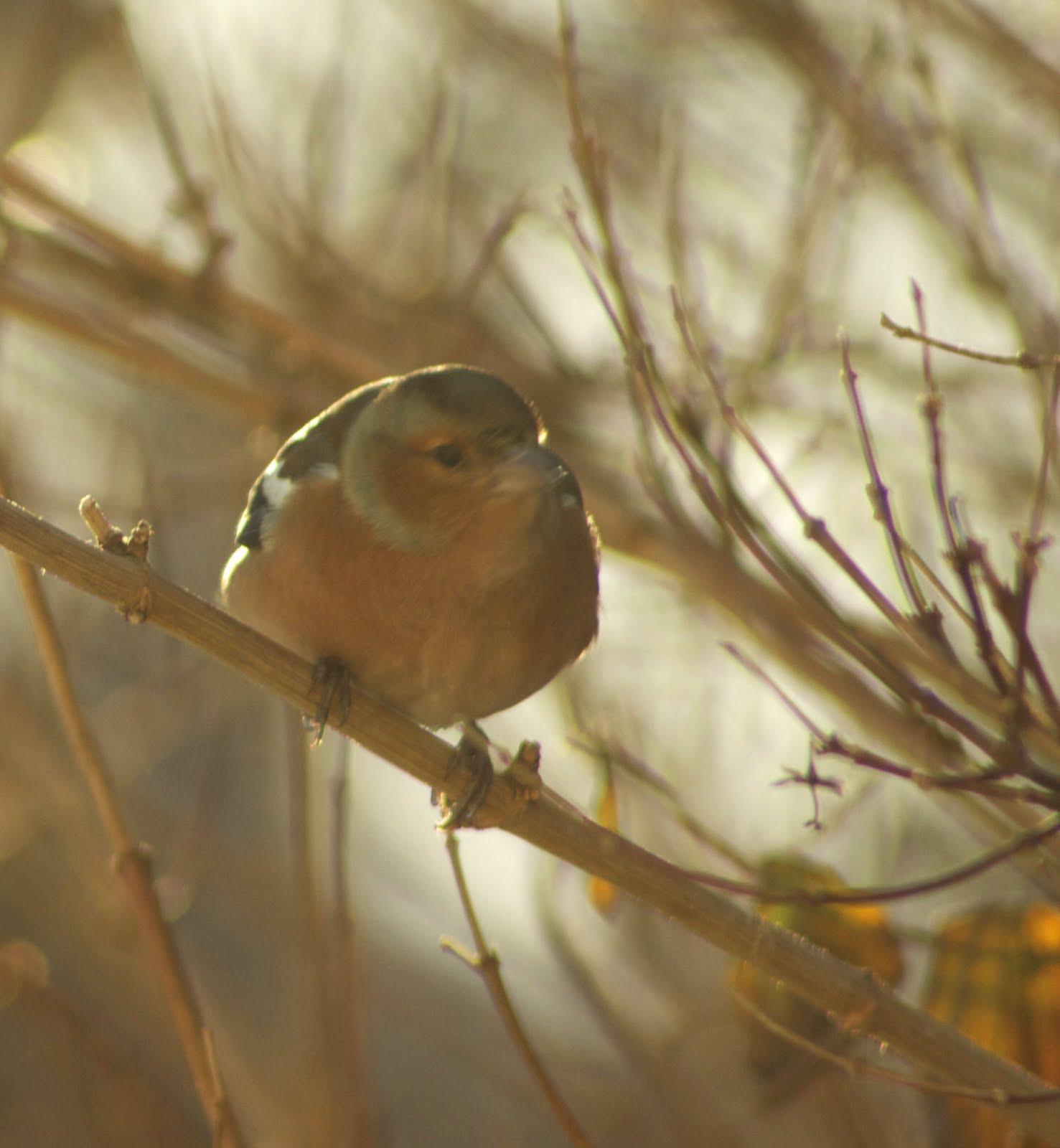 John Clare Weblog: The Gardener\'s Bonny Daughter (Click here)