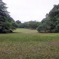 森林,芝生,新宿御苑〈著作権フリー無料画像〉Free Stock Photos
