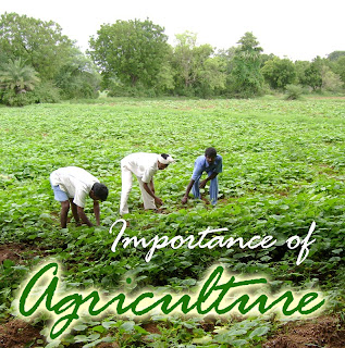 importance of agriculture in india 2018-6-14  modern organic evolved as an alternative to chemical agriculture in the 1940s, largely :  organic farming and its importance   and sir albert howard in india.