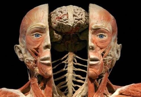 Anatomofisiologia : Por que estudar anatomia e fisiologia?