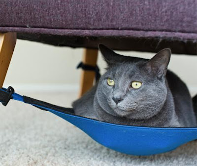 Coolest and Awesome Cat Gadgets (15) 13