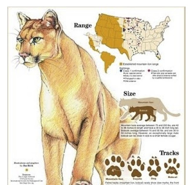 Do Big Cats Regonize Other Cats