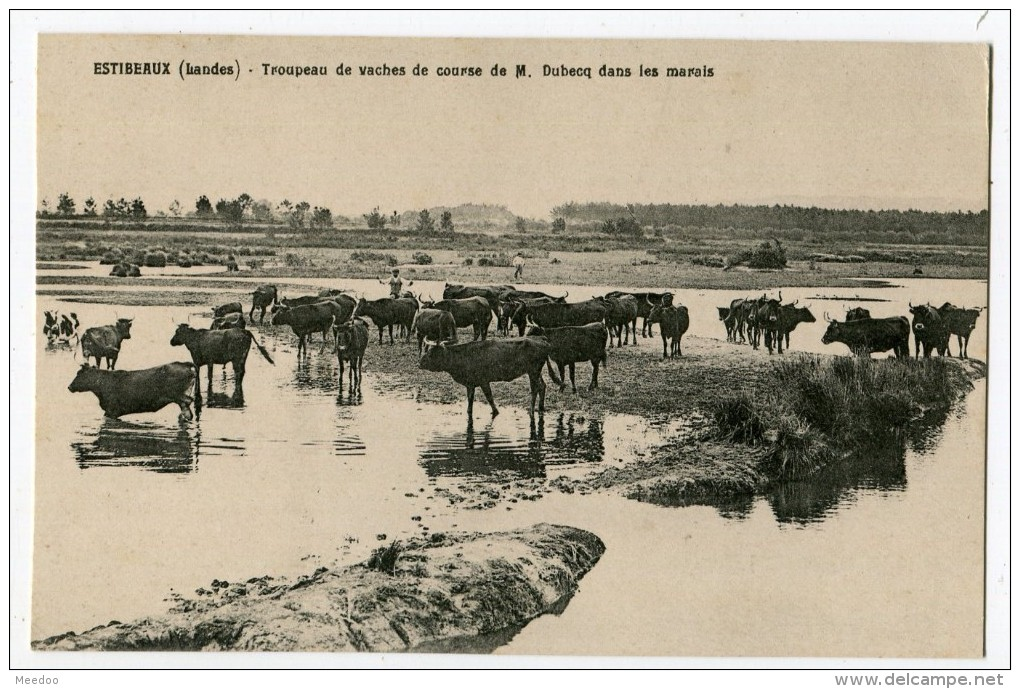 Lo mot grau en gascon, catalan e occitan: ua ipotèsi etimologica revesitada.