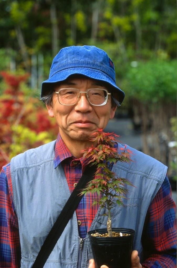 Flora Wonder Blog Experts Pick Favorite Maples