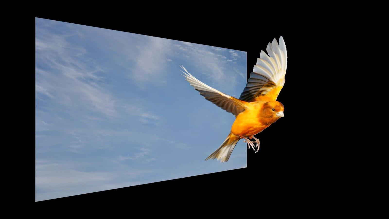 O Pássaro voando para alem do céu