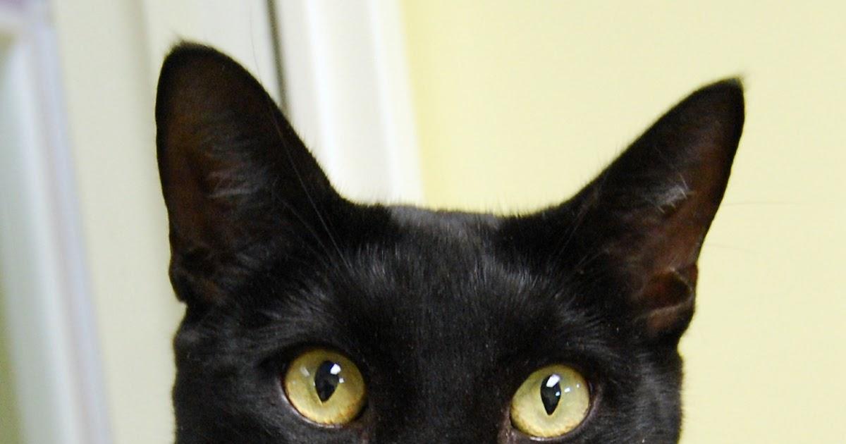 funny animals funny black cat tricks
