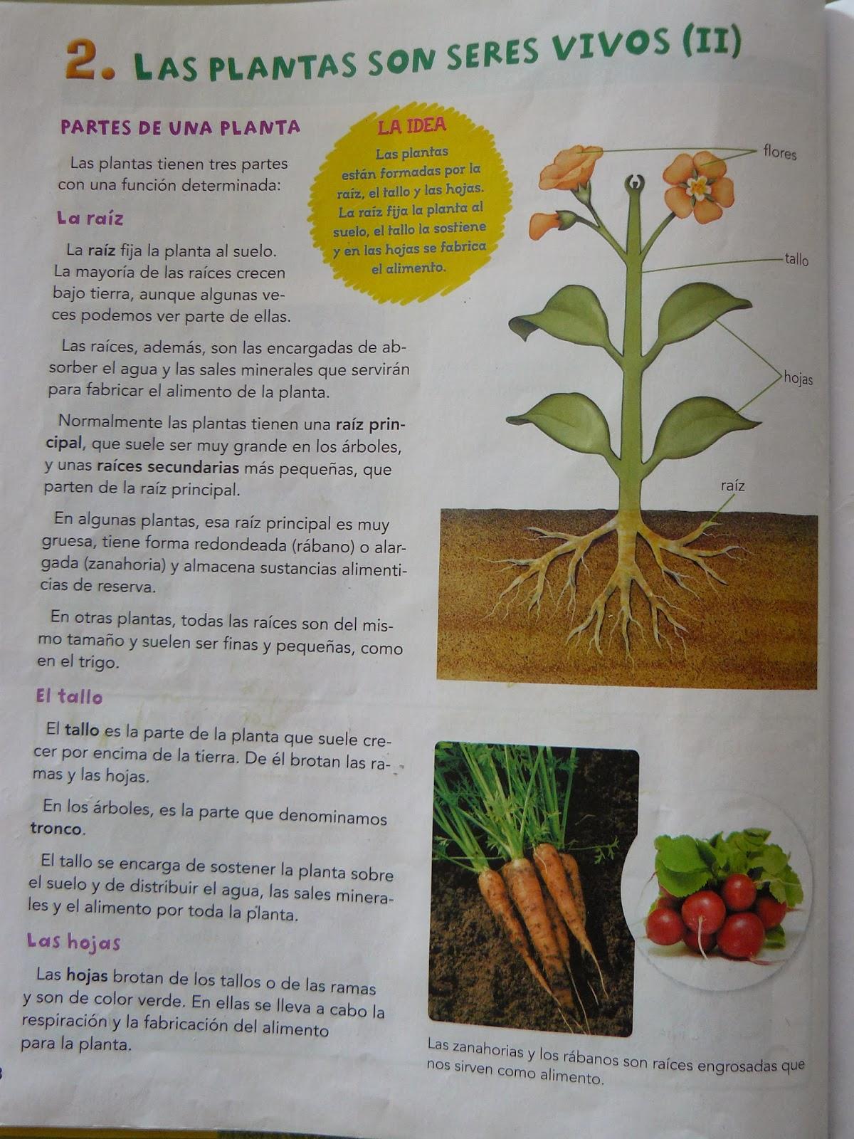 el texto como pretexto los rboles y las plantas en la