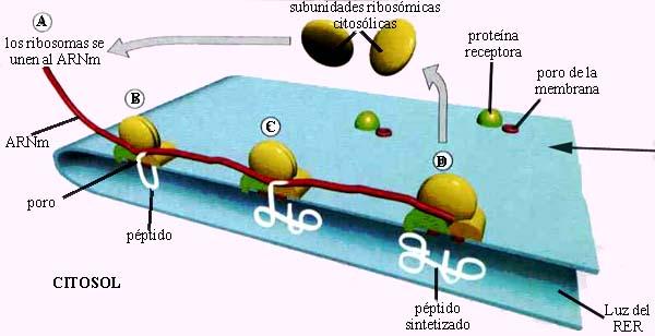 lipidos asociados esteroides