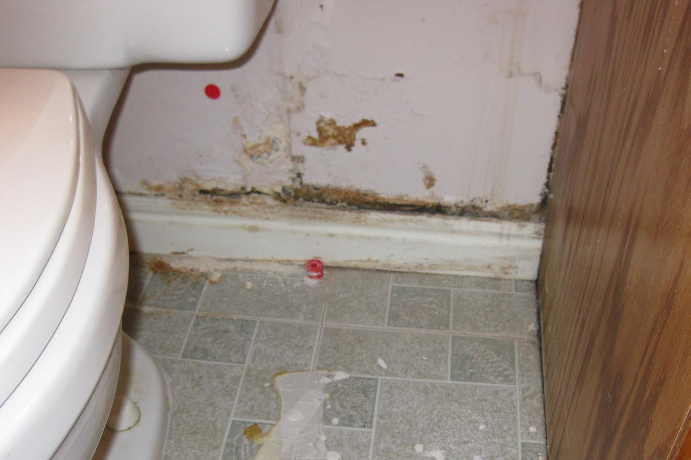 Dangers of mold in bathroom - Dangers Of Mold In Bathroom 50