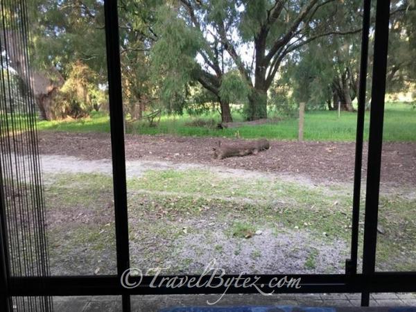 Margaret River Hideaway & Farmstay (Australia)