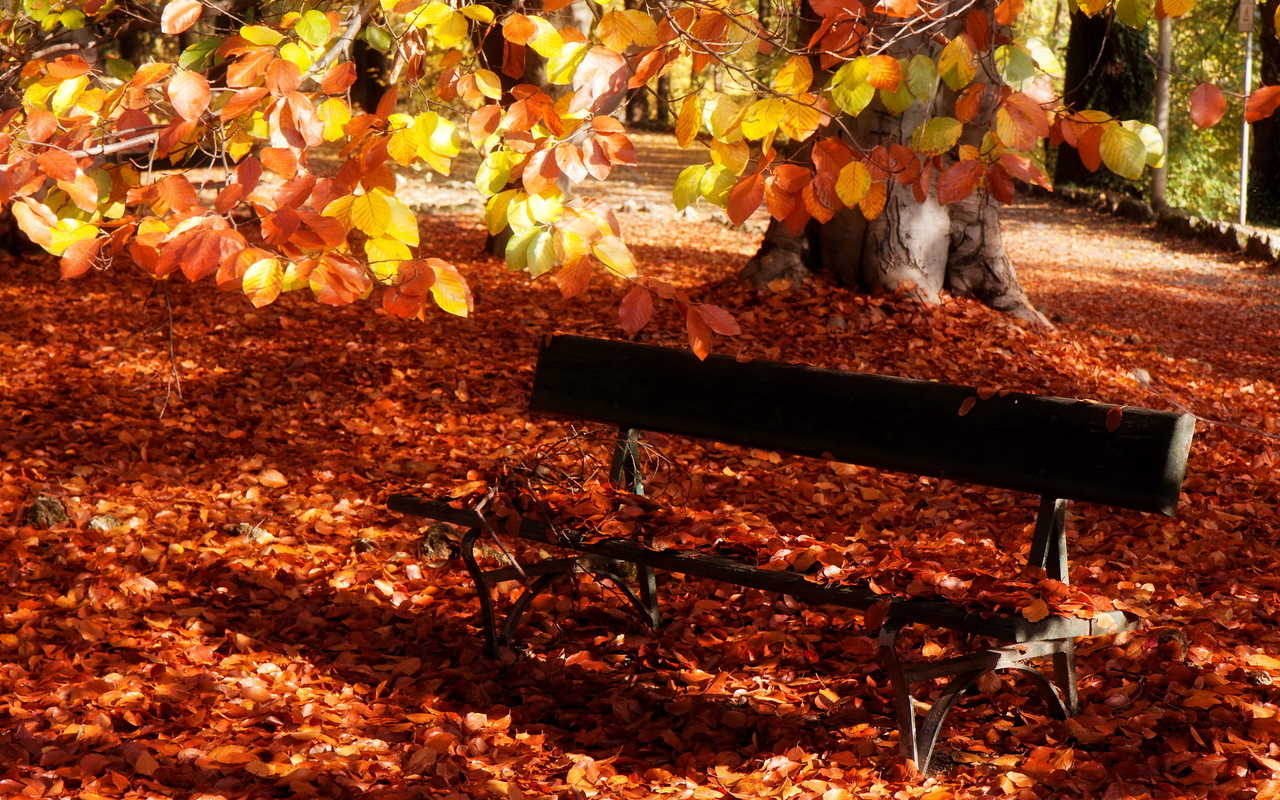 http://3.bp.blogspot.com/-OFxd3ysqJdY/UMEdOWbphwI/AAAAAAAAGjY/aXhH3Z4MVi4/s1600/Dry-Leaves-Covered-Bench-Fall-Desktop-Wallpaper.jpg