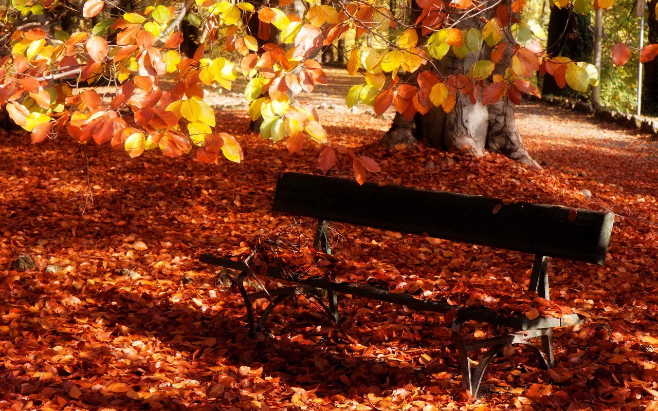 http://3.bp.blogspot.com/-OFxd3ysqJdY/UMEdOWbphwI/AAAAAAAAGjY/aXhH3Z4MVi4/s1600/Dry-Leaves-Covered-Bench-Fall-Desktop-Wallpaper.jpg