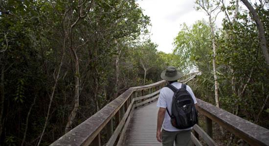 Pararelas en los Everglades, similares a Las Tablas de Daimiel