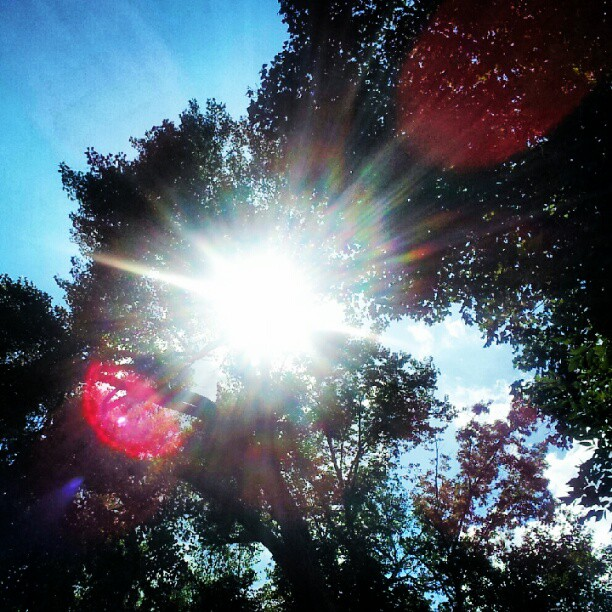 instagram photo image sunshine through the trees prior lake minnesota beautiful