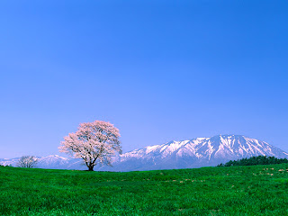 Winter+Mountain+Behind+Flower