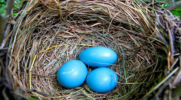 Penjelasan Ilmiah Mengenai Telur Dengan Biru dan Hijau